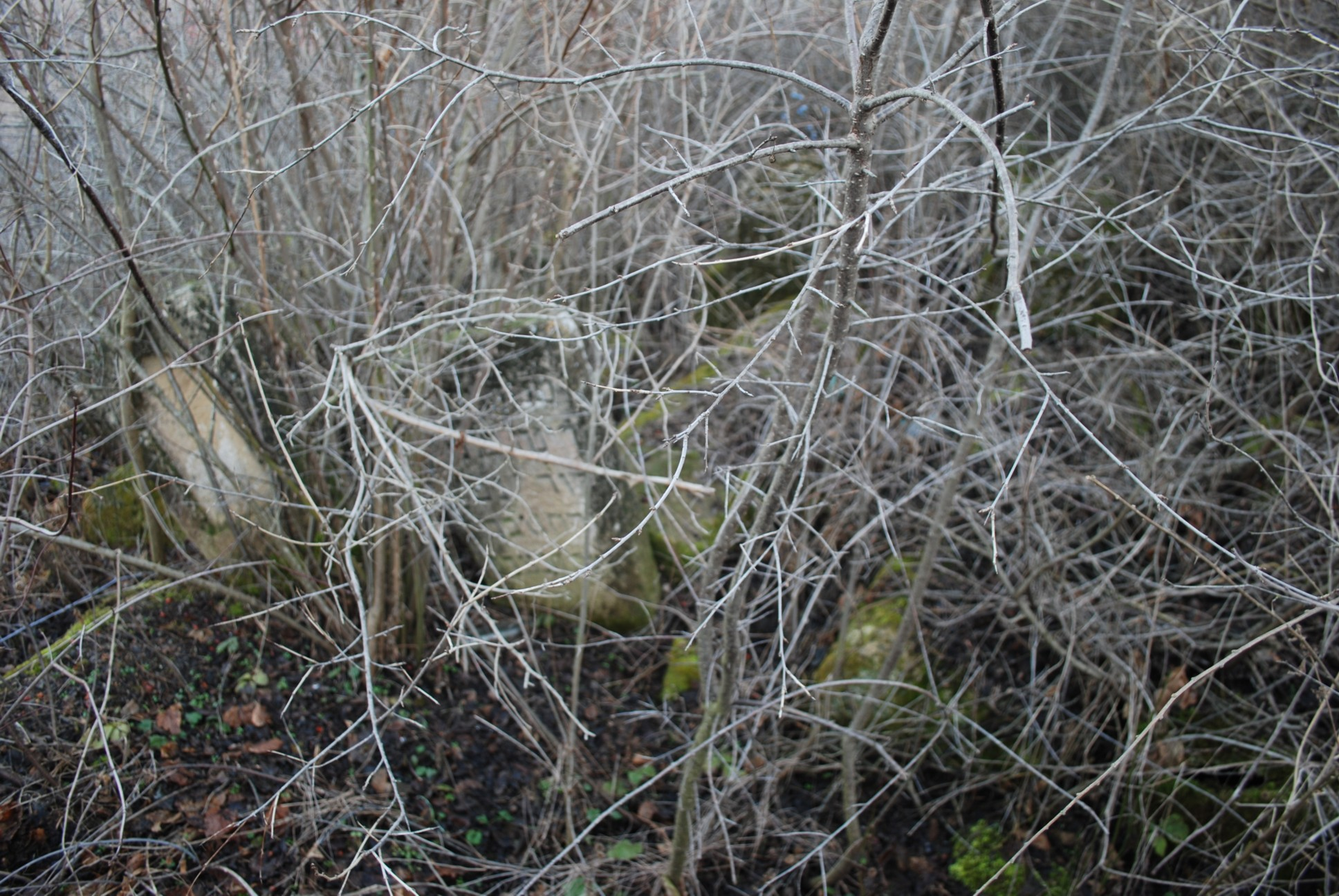 MOLD-06631_StoneOvergrowth.jpg